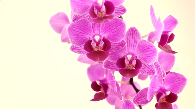 Beautiful rare orchid in pot on White  background