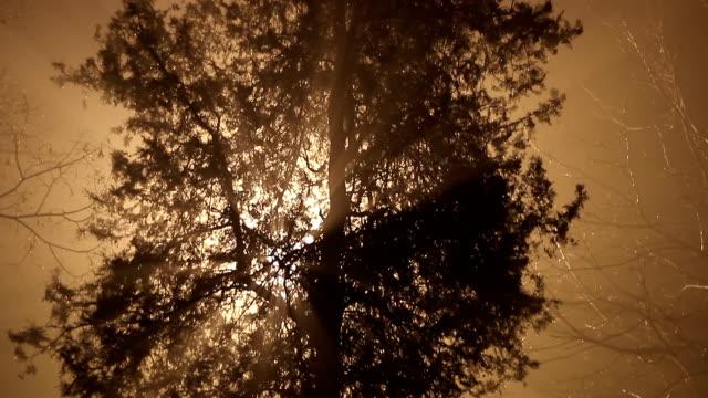 beautiful rays video