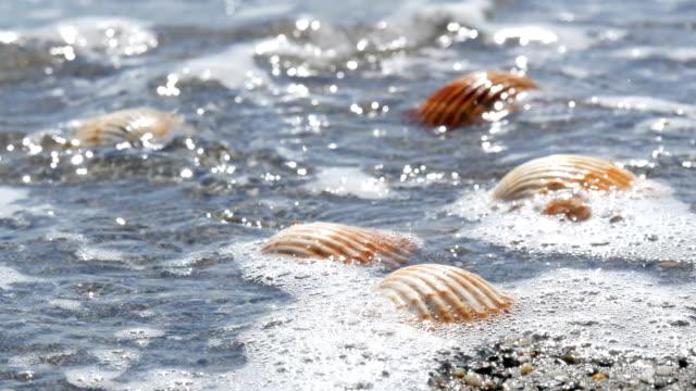 vídeos de stock e filmes b-roll de beautiful relief seashells that wash a wave - bugio