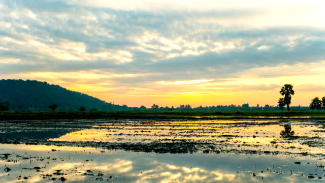 Beautiful Rice Field with Cloudy Sky and Reflection on Water Time Lapse of Beautiful Rice Field during Preparation with Cloudy Sky and Reflection on Water Surface at Morning, Crane down shot. high dynamic range imaging stock videos & royalty-free footage