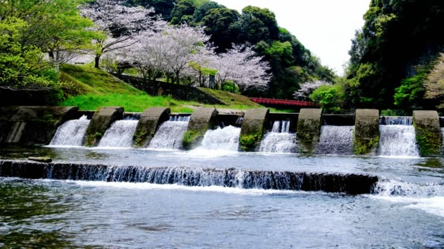 Beautiful river, bridge and cherry blossom landscape in Iwaya Park