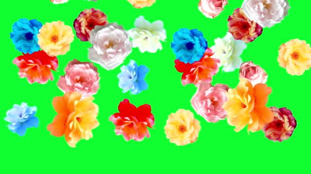 Beautiful roses flowers animation, removable background using chroma key video