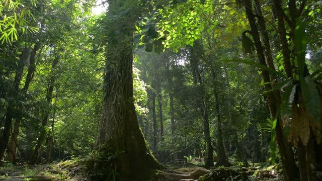 熱帯雨林の緑の植物の中で、大きな木の美しい風景が日光の下で育ちます。 - 雨林点の映像素材/bロール