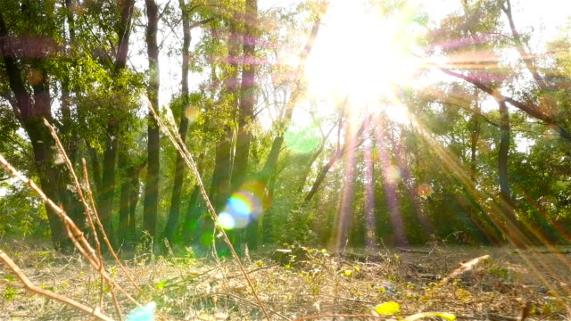Beautiful scenery with sun rays. The camera is moving forward. Slow motion video