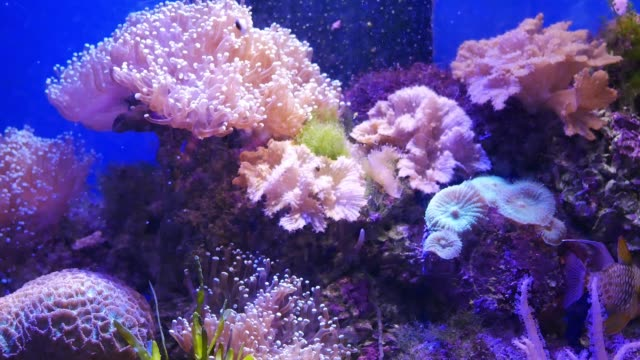 Beautiful sea flower in underwater world with corals and fish. Beautiful sea flower in underwater world with corals and fish. kelp stock videos & royalty-free footage