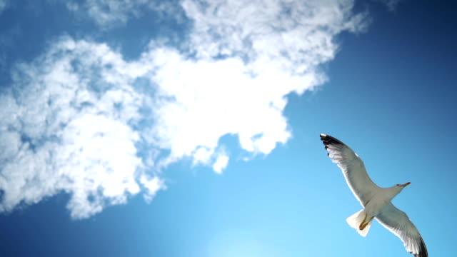 Beautiful seagulls flying in the sky Beautiful seagulls flying in the sky. seagull stock videos & royalty-free footage
