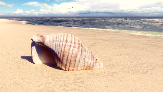 vidéos et rushes de beau coquillage sur une plage de sable fin, lavé par la vague de l'océan. belle boucle d'animation 3d. - coquillage