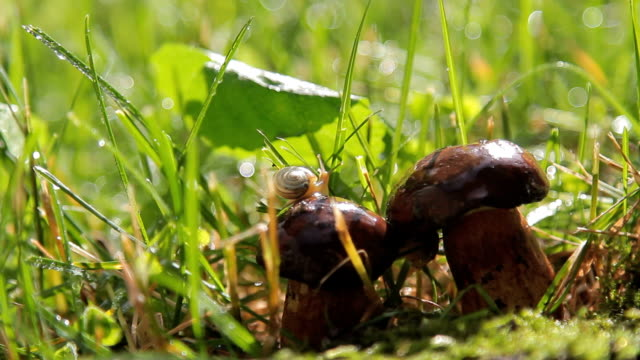 beautiful shot of snail on the mushrooms. Forest After the rain.