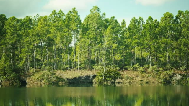 Beautiful shot of trees surrounded by a lake video
