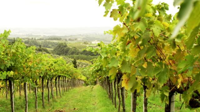 Beautiful shot of Vineyard at Sunny Day video