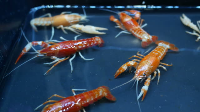 Beautiful shrimp in farm Beautiful shrimp in farm household fixture stock videos & royalty-free footage
