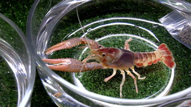 Beautiful shrimp video