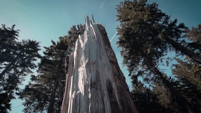 Schön Slow Motion Wald mit einem gebrochenen Baum in der Mitte und Sonne flares – Video