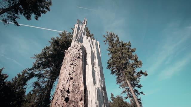 Schön Slow Motion Wald mit einem gebrochenen Baum in der Mitte – Video