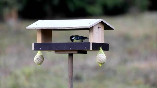 beautiful small garden bird on bird feeder