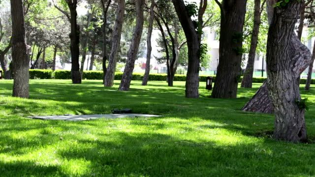 Beautiful smooth and green lawn park in Baku.Fresh green grass shot video
