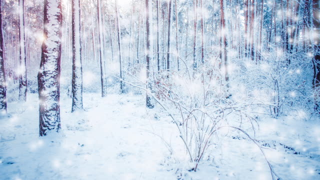 beautiful snow-covered trees spruce in the forest in winter during a snowfall - gif filmów i materiałów b-roll