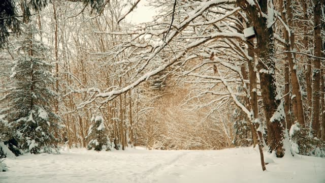 Beautiful snowy forest in December before Christmas