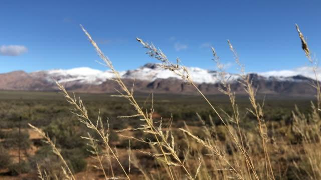 schöne snowy mountain karoo winter landschaft südafrika vordergrund fokus gras - afrikanische steppe dürre stock-videos und b-roll-filmmaterial