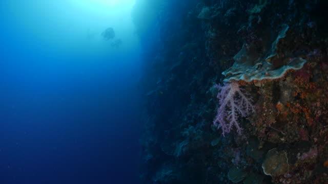 vídeos y material grabado en eventos de stock de hermoso coral blando en el arrecife del mar profundo - palaos
