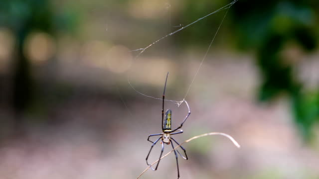 Beautiful spider and web in the nature, 4K.
