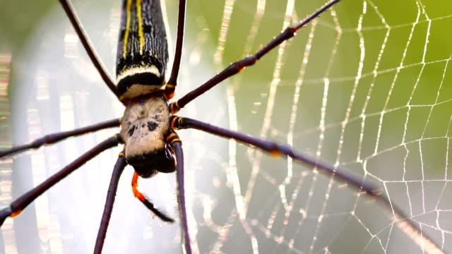 vackra spindel och webb i naturen, 4k. - spindel arachnid bildbanksvideor och videomaterial från bakom kulisserna