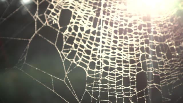 vackra spindelnät i solnedgången - spindelväv bildbanksvideor och videomaterial från bakom kulisserna