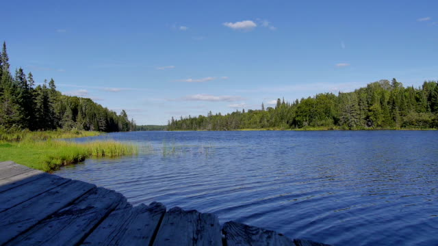Beautiful spring landscape with lake, trees and blue sky. Composition of nature video