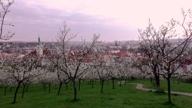 vidéos et rushes de belle vue de printemps de prague après le lever du soleil de floraison petrin hill, république tchèque - prague
