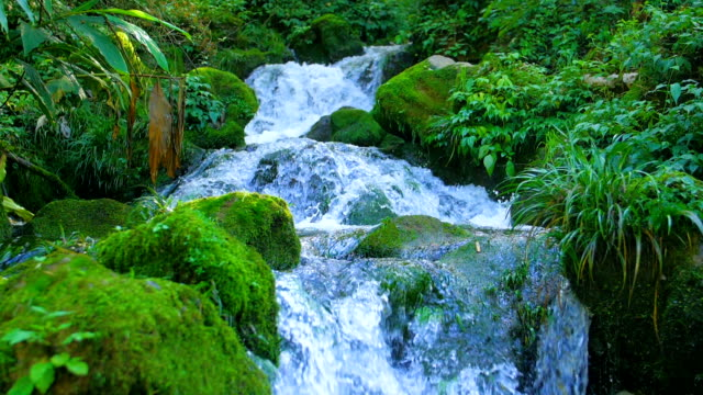beautiful stream in mountain
