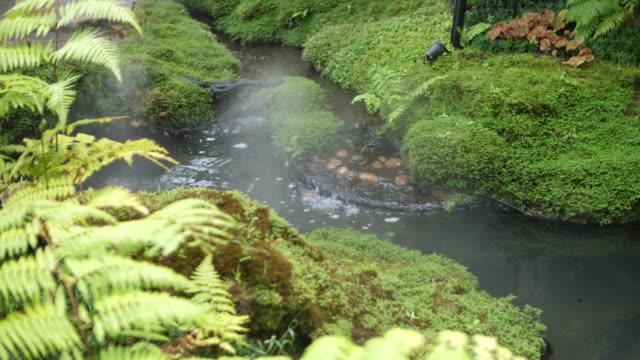 beautiful stream in the forest - jodła filmów i materiałów b-roll
