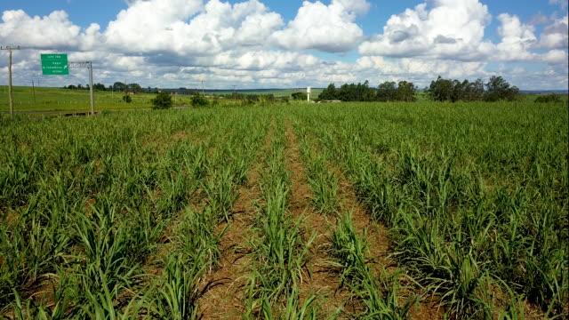 schöne zuckerrohr-plantage in der nähe einer autobahn im inneren des bundesstaates sao paulo. brazilien. luftbild, reisen - schilf stock-videos und b-roll-filmmaterial
