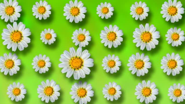 vídeos y material grabado en eventos de stock de fondo floral hermoso verano animado - manzanilla