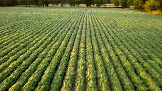 beautiful summertime sunset aerial footage of the michigan farm land - aerial agriculture stock videos & royalty-free footage
