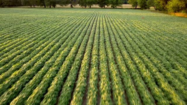 vídeos y material grabado en eventos de stock de hermosas imágenes de summertime sunset aerial de la tierra de la granja de michigan - drone footage