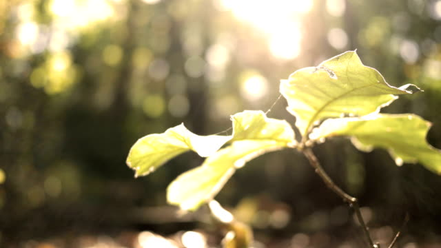 beautiful sunlight bathes a single plant in the forest in autumn - joseph kelly stock videos and b-roll footage