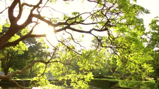 Beautiful Sunny Day in Ancient Garden of Sigiriya, Sri Lanka video