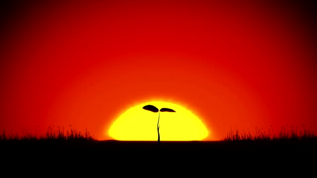 Beautiful Sunrise and Growing Tree. Achievement and Progress Concept animation. Rising Sun Gives New Life. video