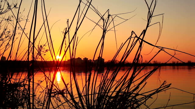 Beautiful  sunrise in the wood video