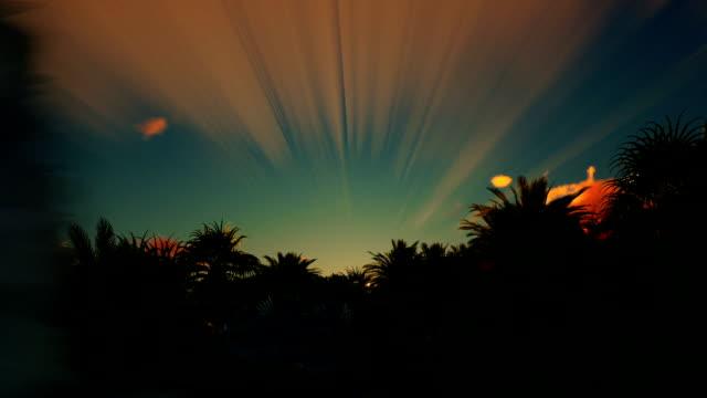 vídeos de stock e filmes b-roll de beautiful sunrise over palm tree forest - oleo palma