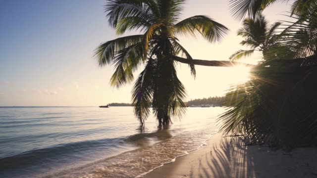 Beautiful sunrise over the tropical beach and exotic palm tree Beautiful sunrise over the tropical beach and exotic palm trees lagoon pacific islands stock videos & royalty-free footage