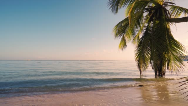 Beautiful sunrise over the tropical beach and exotic palm tree Beautiful sunrise over the tropical beach and exotic palm trees lagoon hawaii islands stock videos & royalty-free footage