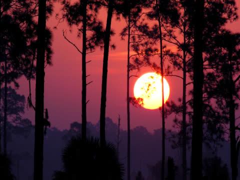 Beautiful Sunrise video