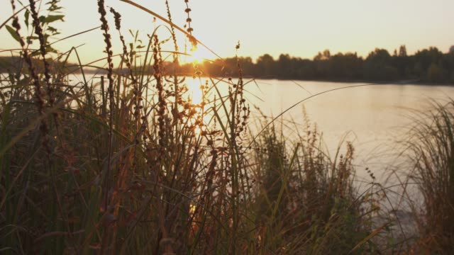 Beautiful sunset on the river. Grass grows near the water. The camera moves from left to right. Beautiful sunset on the river. Grass grows near the water. The camera moves from left to right. fishing rod stock videos & royalty-free footage