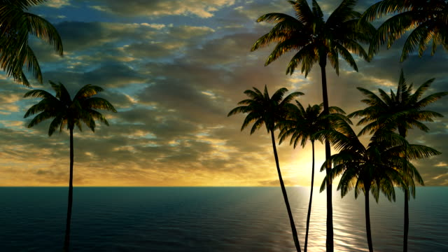 Beautiful sunset on the sea and palm trees