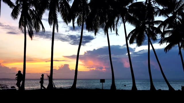 Beautiful sunset on tropical island. Palm trees' silhouettes video