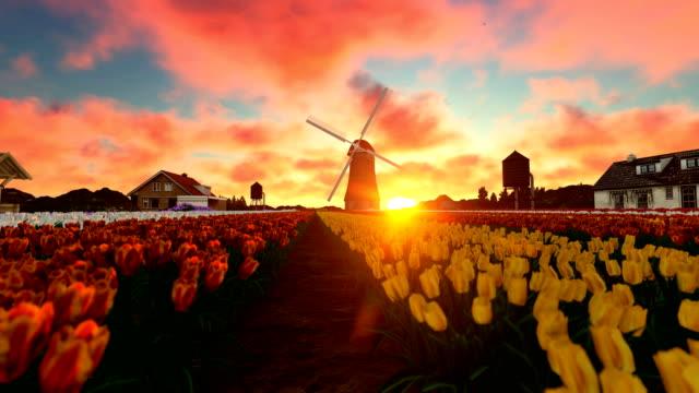 stockvideo's en b-roll-footage met prachtige zonsondergang over tulip field - netherlands