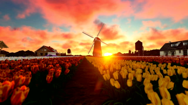 Beautiful sunset over tulip field Beautiful sunset over tulip field netherlands stock videos & royalty-free footage
