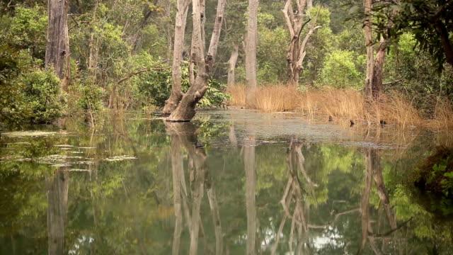 piękne swamp i odbicie w panna rezerwat tygrysów, indie. - madhya pradesh filmów i materiałów b-roll