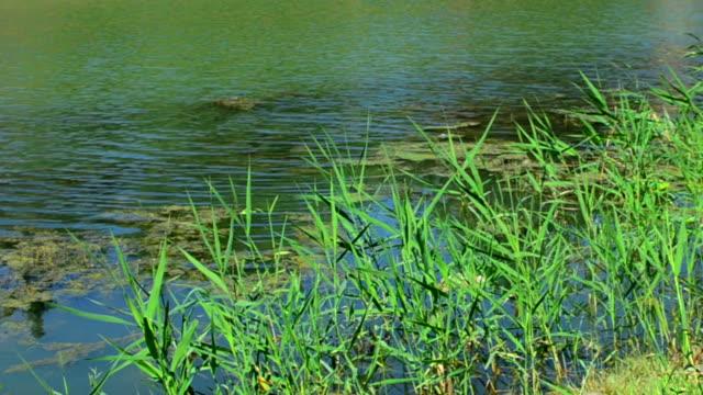 Beautiful swamp in summer